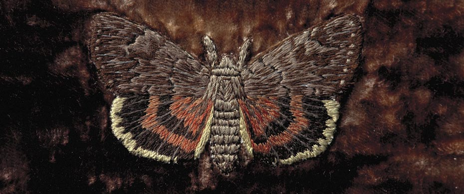 Penitent Underwing, a detail